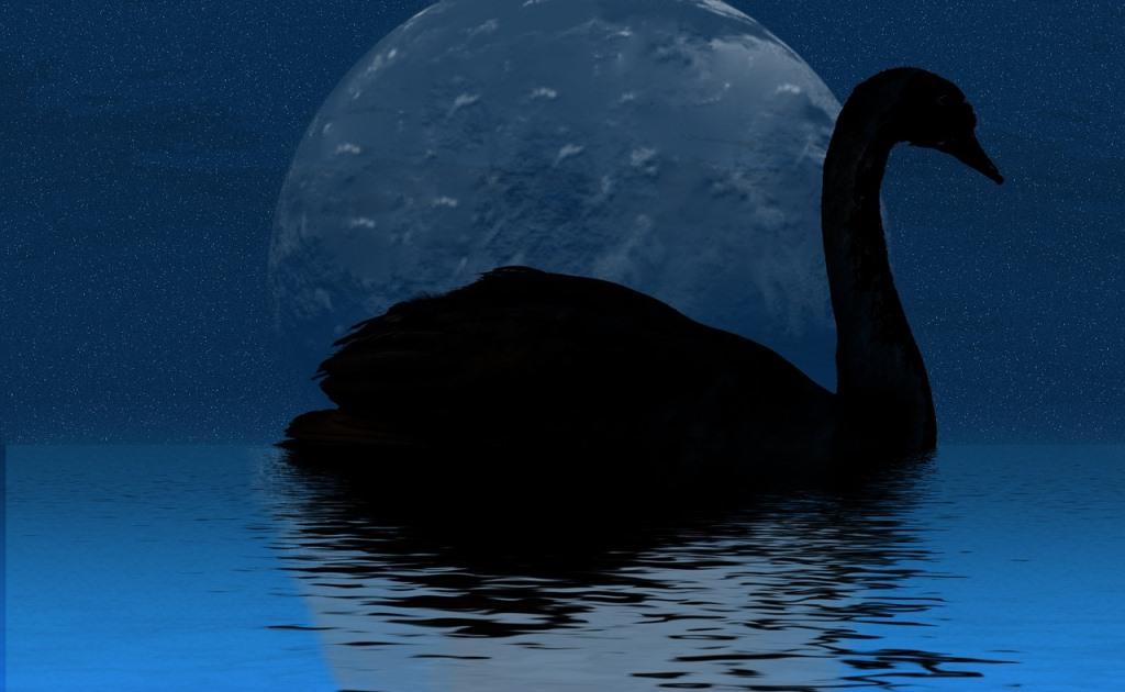 Что такое термин Черный лебедь и как связана с ним технология блокчейн