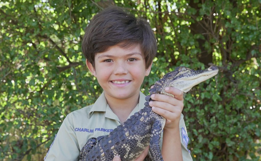 Индикатор Аллигатор: как рептилия попала в мир трейдинга