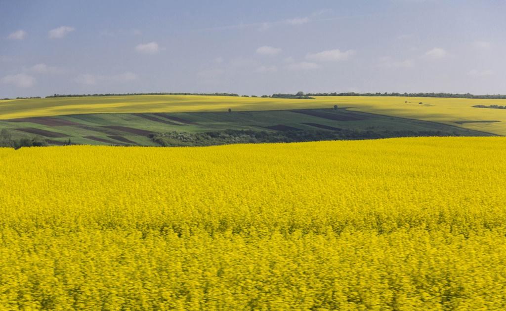 Украинские компании могут майнить без лицензии