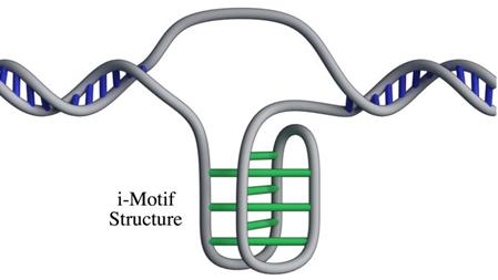 Новая структура ДНК человека
